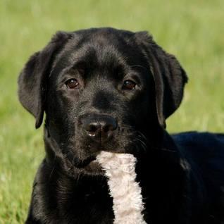 puppy on nursery page